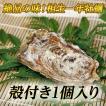 【牡蠣の王様】瀬戸内相生産殻付牡蠣1個