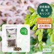 モリンガ種 100~110粒 無農薬