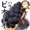 お中元 御中元 ギフト フルーツ ぶどう 葡萄 ブドウ ハウス ピオーネ
