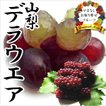お中元 御中元 ギフト フルーツ ぶどう 葡萄 ブドウ デラウエア(露地)
