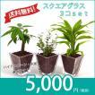 【送料無料】スクエアグラス 3コセット ハイドロコーン植え 炭植え 観葉植物/ハイドロカルチャー/水耕栽培/インテリアグリーン