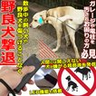 野良犬 犬 クリッカー 撃退 威嚇 駆除 ドッグチェーサー ハンディタイプ ドッグチェイサー 飼い犬 無駄吠え防止 超音波 しつけ 対策 訓練 調教 LEDライト