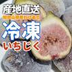 訳あり ご家庭用 フルーツ王国 和歌山県産 産地直送 冷凍いちじく 500g クール便 送料無料