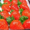 奈良県産いちご 古都華 大粒24入り  「あすかルビー」を超えた奈良県生まれのいちごの優良品種  出荷予定期間:1月中旬〜2月上旬