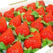 徳島県佐那河内村産 さくらももいちご 20粒入り  ももいちごの里で育った苺の新品種!  発送:12月中旬〜下旬の間 到着日の指定不可