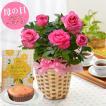 母の日プレゼント 選べる季節の鉢花A 吉本花城園 フラワーギフト2017