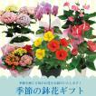 園芸専門店が選ぶ季節を感じる鉢花ギフト!