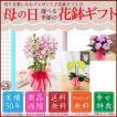 母の日プレゼント 選べる季節の鉢花D 吉本花城園 フラワーギフト2017