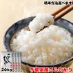 米 お米 20kg (5kgx4袋) 千葉県産 こしひかり ※五分搗き 七分搗き 白米 選択可
