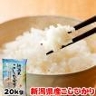 米 お米 20kg (5kgx4袋) 新潟県産 こしひかり