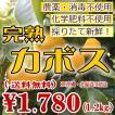 【送料無料】黄色く色づいております!柑橘類 完熟かぼす カボス【農薬・化学肥料・消毒・除草剤不使用】Kabosu 三重県産1.2kg《大きさまちまち!皮まで安心!》