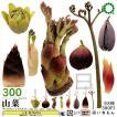 ネイチャーテクニカラーMONO PLUS 山菜ボールチェーンマスコット 全8種セット (ガチャ ガシャ コンプリート)