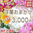 洋蘭おまかせ3,000円