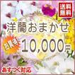洋蘭おまかせ10,000円