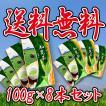 【新茶できました!】菊永茶生産組合から生産者直送でお届けする「知覧茶」の100g×8本入り 送料無料!