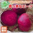 北海道産 真っ赤なレッドビーツ 10玉セット 1玉約150g 送料無料/北海道で野菜ソムリエの資格を持つ農家さんが無農薬で栽培しました。