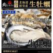北海道根室産(温根沼産) 殻付き生牡蠣 Lサイズ×10個(120g以上)  カキナイフ付