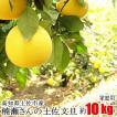 家庭用 楠瀬さん 土佐文旦 約10kg 高知県 土佐市 とさぶんたん ぶんたん ブンタン まる庄果樹園