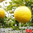 【贈答用】楠瀬さんの土佐小夏 2L〜L/5kg(日向夏・ニューサマーオレンジ)