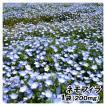 種 花たね ネモフィラ 1袋(200mg) / 花種 花の種 は...