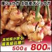 種ショウガ 土佐産大ショウガ 500g / 生姜 しょうが たね芋