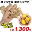 種ショウガ 黄金ショウガ 1kg