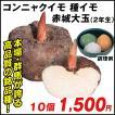 種芋 コンニャクイモ 赤城大玉(2年生) 10個 / たねいも 種いも 蒟蒻 こんにゃく