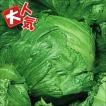 野菜たね レタス 早生サリナス 1袋(5ml入)
