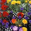 花たね 種 高性切花ミックス 1袋(500mg) / タネ 種 フ...