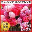 チューリップ 球根 さくらブレンド (無選別) 20球 チューリップの球根 ピンク 桃花