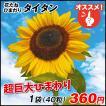 花たね ヒマワリ タイタン 1袋(35粒)