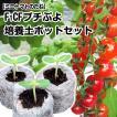 野菜たね トマト F1 CFプチぷよ 1袋(10粒)と培養土...