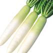 種 野菜たね ダイコン F1強健総太り大根 1袋(5ml) / ...