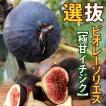 イチジク 苗木 選抜ビオレーソリエス 1株 / いちじく ...