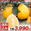 レモン 苗木 璃の香P 1株 / 檸檬 レモンの木 レモン...