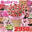 母の日 2017 送料無料 カーネーション 5号鉢 赤桃...
