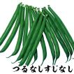 野菜たね インゲン つるなしすじなし菜豆 1袋(30ml)