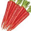 野菜たね ニンジン 祝紅金時 1袋(10ml入)