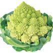種 野菜たね カリフラワー F1サンゴ礁花椰菜(はなや...