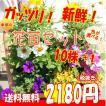 送料無料 プレゼント付花苗 セット10株+1 福袋 ...