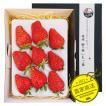 【1月末から2月末限定】特大いちご・紅ほっぺプラチナプレミアム9粒500g 入り