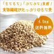 もち麦4.5kg 3,980円 送料無料 900g×5袋(チャック付き)