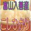 入善産こしひかり 10kg(白米) 令和2年産 富山県産