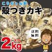 孝ちゃん厳選 生食用 殻付牡蠣 さこし2kg