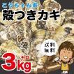 孝ちゃん厳選 生食用 殻付牡蠣 さこし3kg