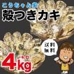 孝ちゃん厳選 生食用殻付牡蠣 さこし4kg
