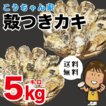 孝ちゃん厳選 生食用殻付牡蠣 さこし5kg