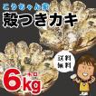 孝ちゃん厳選 生食用殻付牡蠣さこし6kg