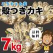 孝ちゃん厳選 生食用殻付牡蠣さこし7kg