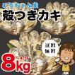 孝ちゃん厳選 生食用殻付牡蠣さこし8kg